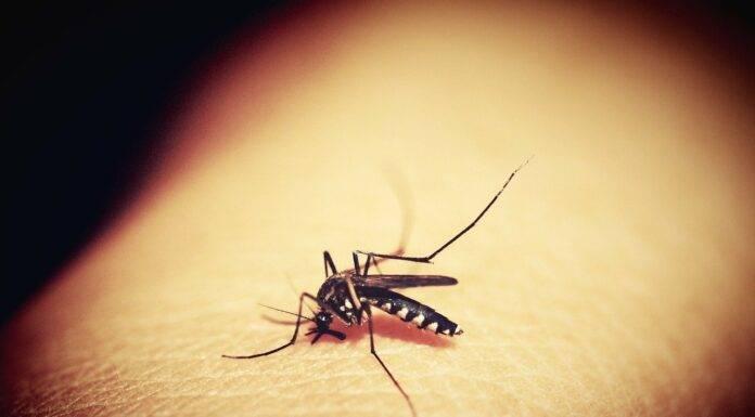 malaria komar
